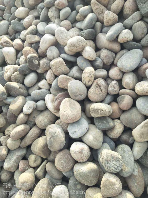 本诺厂家供应环保鹅卵石 地坪鹅卵石 规格齐全