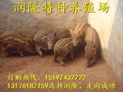 http://himg.china.cn/0/4_261_236216_400_300.jpg