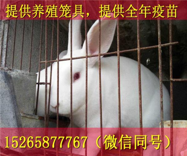 http://himg.china.cn/0/4_265_1021597_600_500.jpg