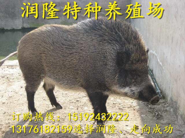 http://himg.china.cn/0/4_265_236336_640_480.jpg