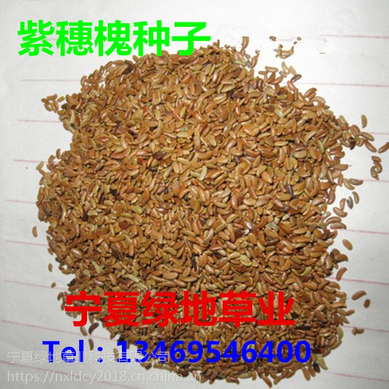 批发林木中药材【紫穗槐树种子】棉槐种子 绿化工程 量大从优