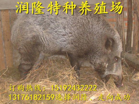 http://himg.china.cn/0/4_278_234664_580_435.jpg