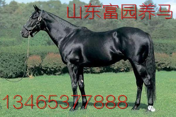 http://himg.china.cn/0/4_279_237180_600_400.jpg