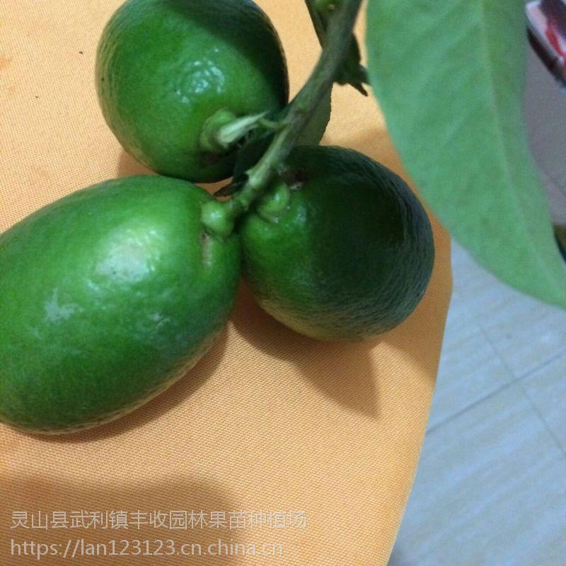 田林香水柠檬苗批发当年结果西林各类柠檬苗批发15777793411