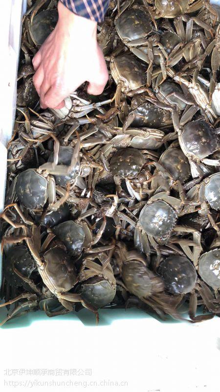1两公鲜活大闸蟹 安徽无为螃蟹 食用螃蟹 冬季正常供应