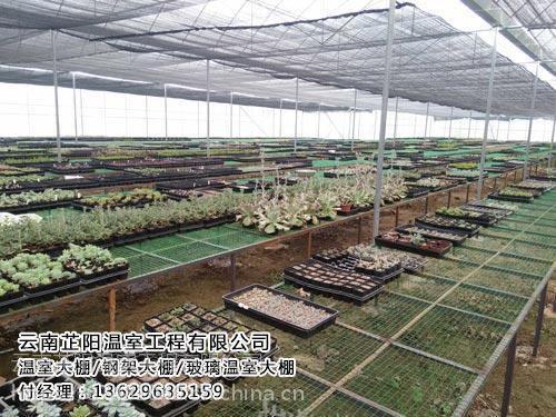 红河农业温室大棚_芷阳温室(图)_农业温室大棚厂家直销价
