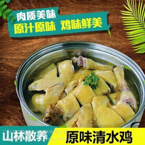 广州天农清远鸡-清远鸡批发 凤须土鸡专卖店