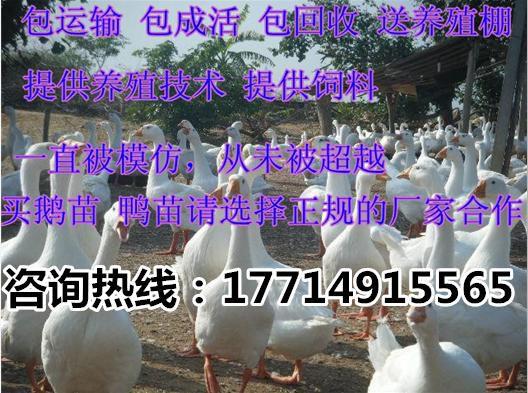 http://himg.china.cn/0/4_322_238338_528_393.jpg