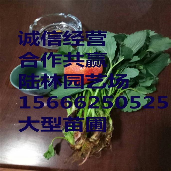http://himg.china.cn/0/4_323_240254_686_686.jpg
