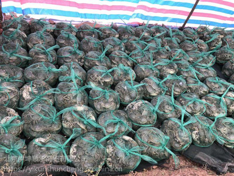 4.5两公鲜活大闸蟹 安徽无为螃蟹 食用螃蟹 冬季正常供应