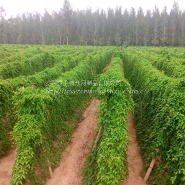 蔬菜豆角搭架技术 20厘米孔径HDPE线材编织爬藤网 安平上善