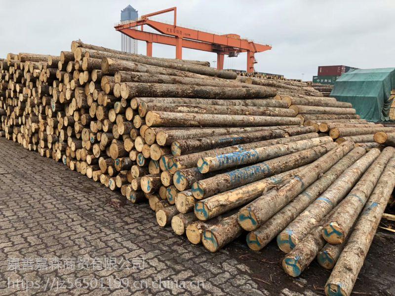 进口俄罗斯白松原木 小直径8-12打桩材 白松板材大直径原木