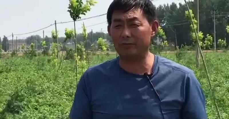 作物使用增产套餐反馈效果,作物增产套餐昆仑风