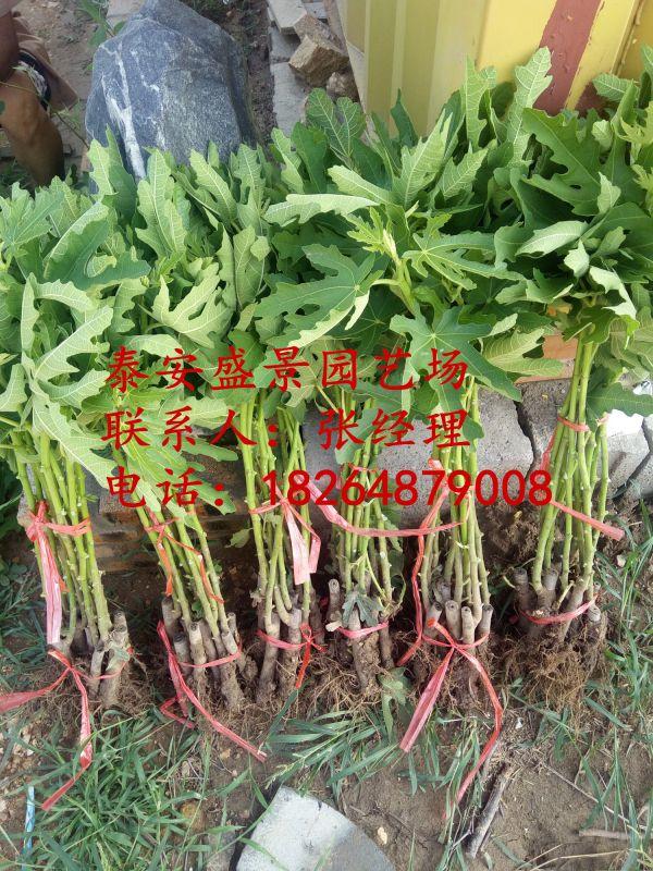 http://himg.china.cn/0/4_346_1033549_600_800.jpg