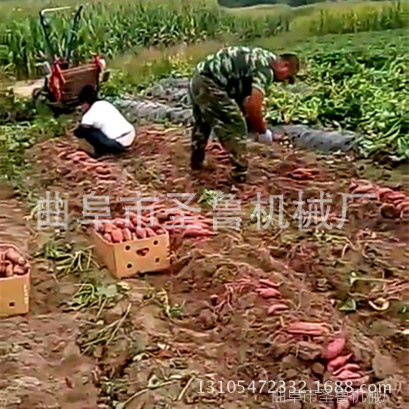 河北小型收获机 手扶牵引式土豆收获机 圣鲁刨红薯机