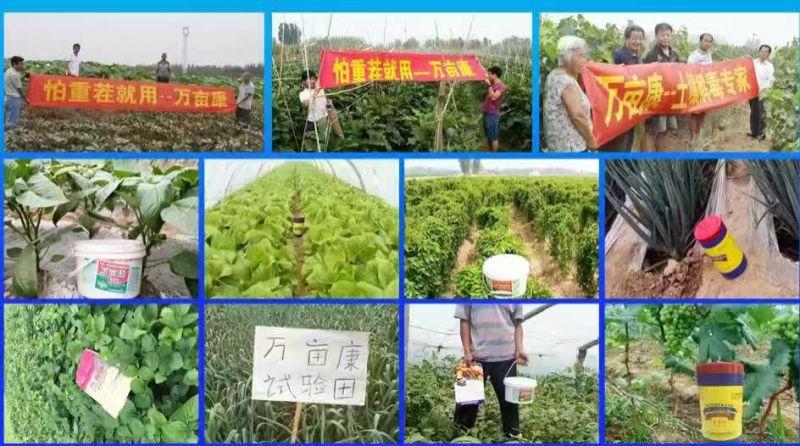 西瓜重茬高产种植方案及万亩康重茬剂在西瓜上使用指导