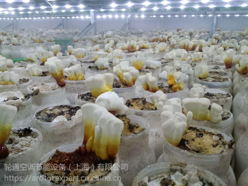 食用菌菇房专用 冷库节能换气机