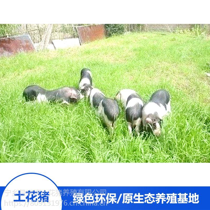 流沙河宁乡土花猪野生猪肉土花猪宝宝精排瘦肉厂家报价