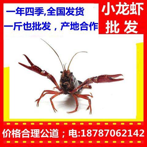 http://himg.china.cn/0/4_366_235846_480_480.jpg