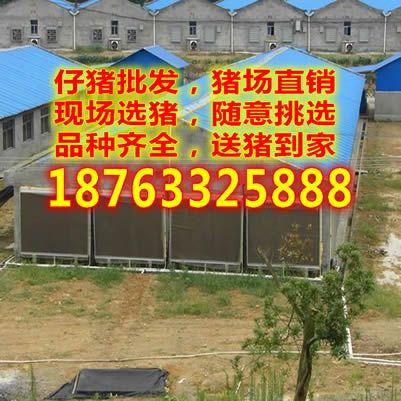 http://himg.china.cn/0/4_366_238026_401_401.jpg