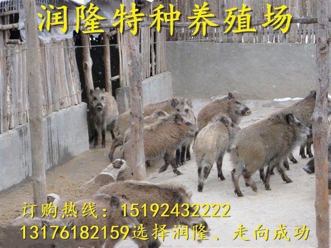 http://himg.china.cn/0/4_36_235020_670_502.jpg