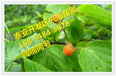 http://himg.china.cn/0/4_377_243618_400_262.jpg