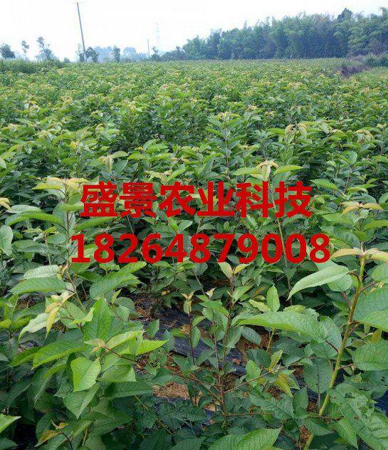 http://himg.china.cn/0/4_380_1032251_545_632.jpg