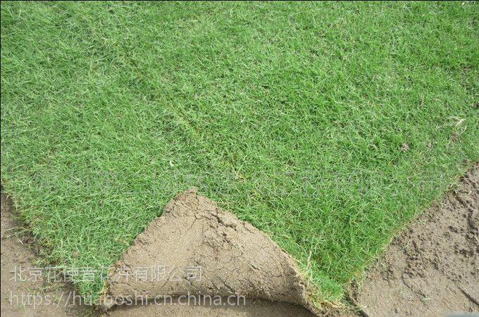 铺草坪贵不贵,铺草坪多少钱,哪里可以买到草坪