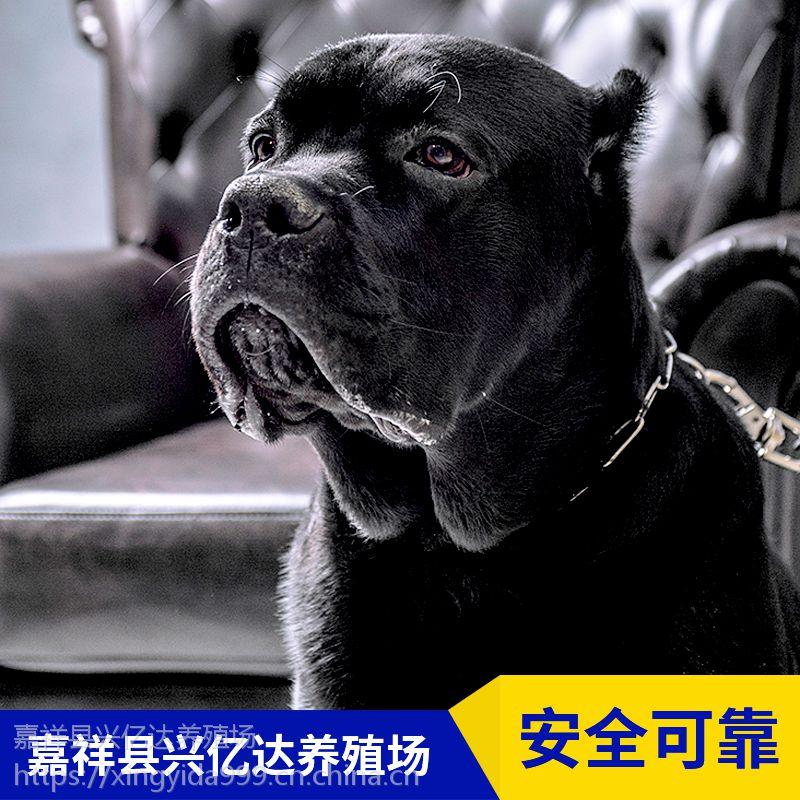 嘉祥县兴亿达幼年卡斯罗幼犬养殖场价格