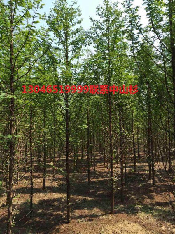 http://himg.china.cn/0/4_384_235856_600_800.jpg
