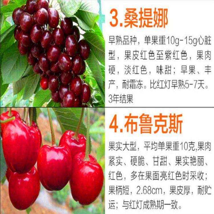 http://himg.china.cn/0/4_391_236836_750_750.jpg