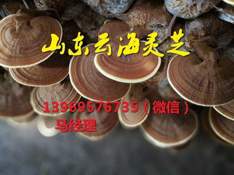 http://himg.china.cn/0/4_39_228512_800_600.jpg