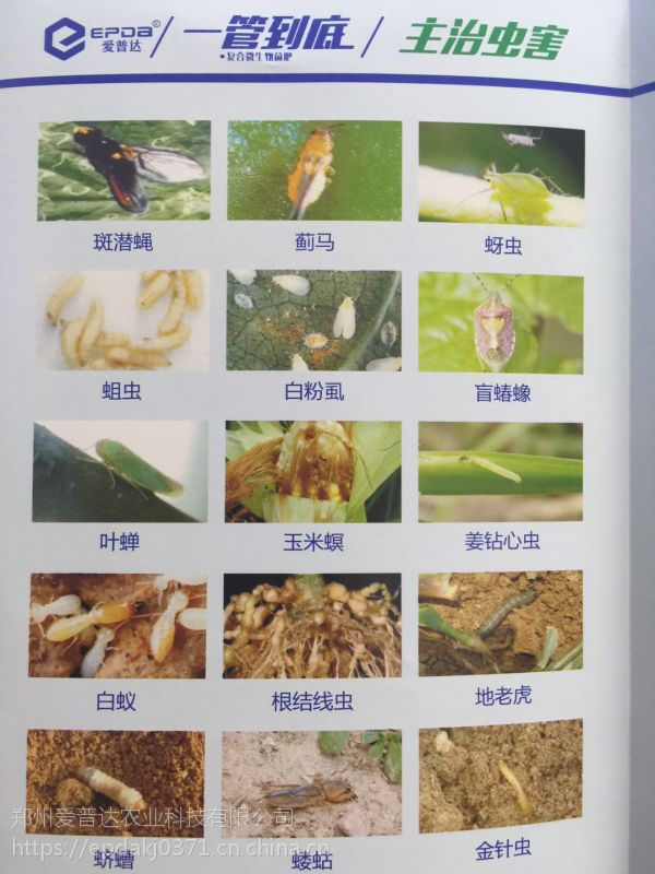 药肥地下害虫特效药一管到底颗粒杀虫药肥