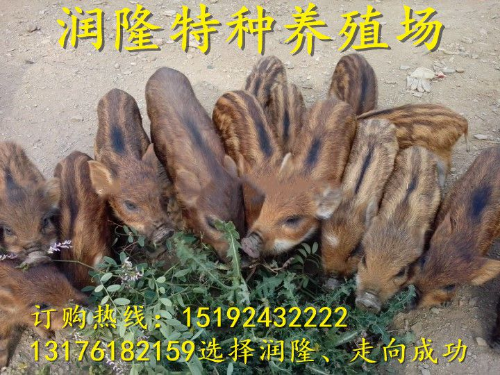 http://himg.china.cn/0/4_406_235694_720_540.jpg