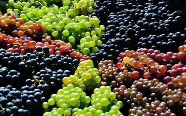 总有一种葡萄,为冰缇烈焰而生
