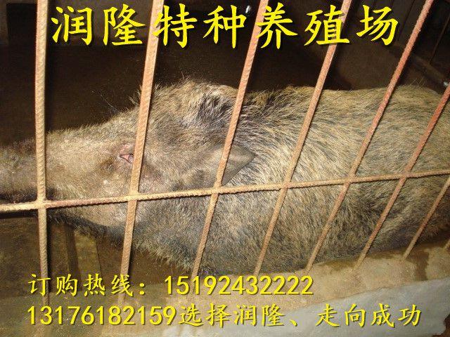 http://himg.china.cn/0/4_412_235098_640_480.jpg