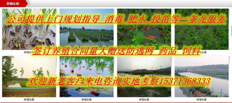 http://himg.china.cn/0/4_41_237578_800_358.jpg