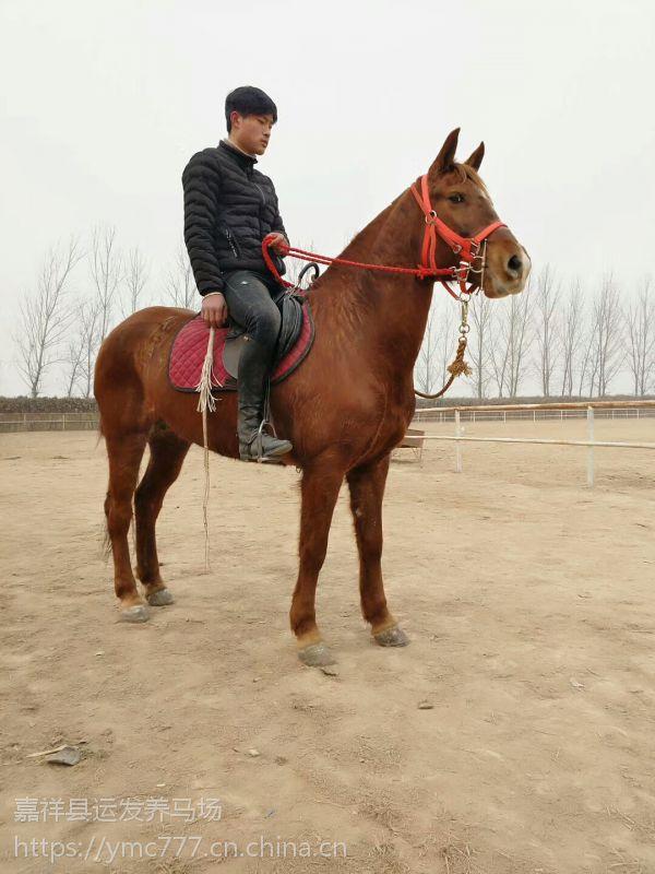 适合家庭的骑乘马哪里有 家庭用的骑乘马哪里有卖的