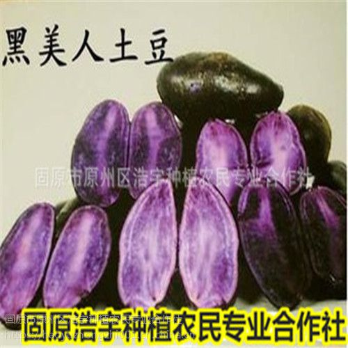 黑土豆 黑美人马铃薯 紫色马铃薯 红美人土豆宁夏固原特产紫色土豆 花青素