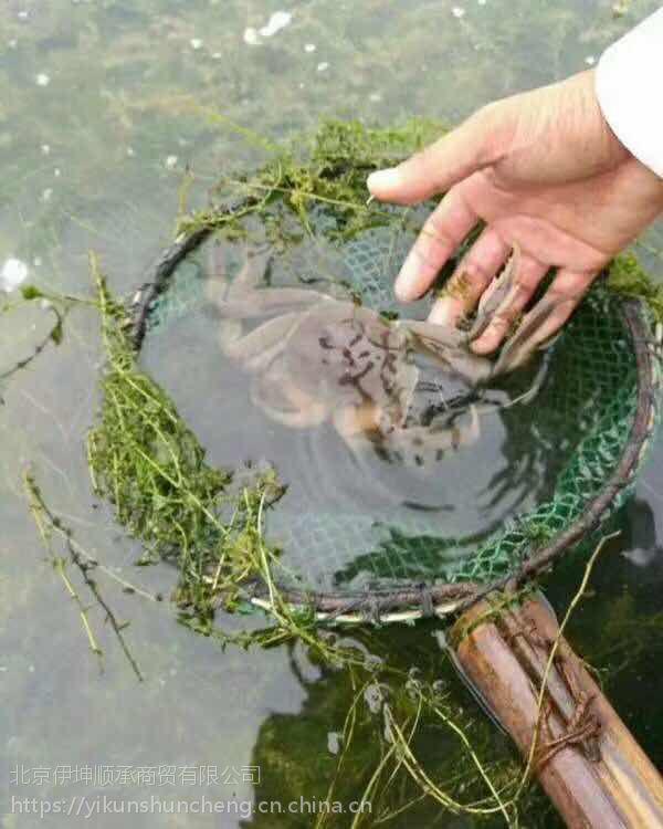 3.5两公鲜活大闸蟹 安徽无为螃蟹 食用螃蟹 冬季正常供应