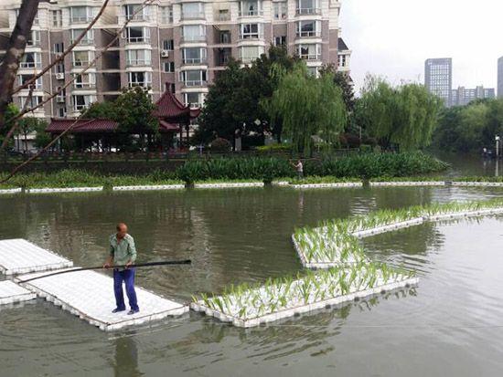 浙江生态浮床、浙江地区生物生态浮床净化水质