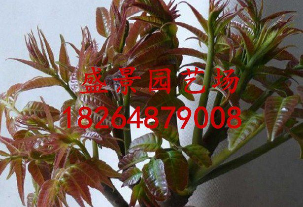 http://himg.china.cn/0/4_445_1023855_615_420.jpg
