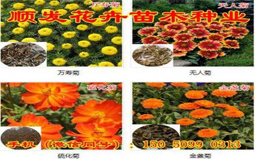 http://himg.china.cn/0/4_448_237400_500_312.jpg