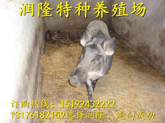 http://himg.china.cn/0/4_450_234100_670_503.jpg