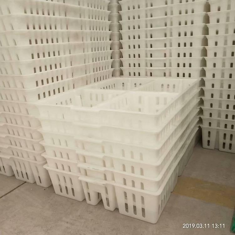 厂家塑料鸡苗筐运输鸭苗周转筐 透气鸡苗周转箱