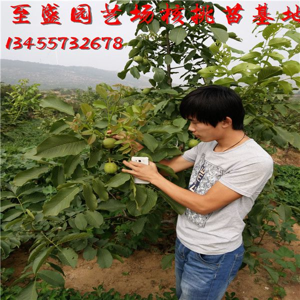 http://himg.china.cn/0/4_461_236828_600_600.jpg