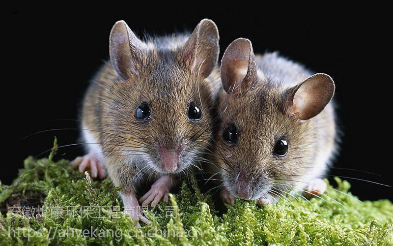 合肥灭老鼠合肥环保公司烨康环保