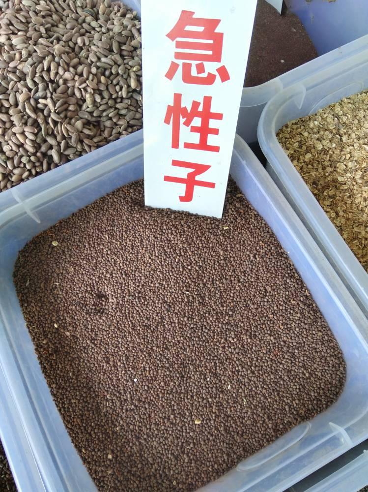 红花种子一亩地种植4公斤@@红花亩产效益6000左右