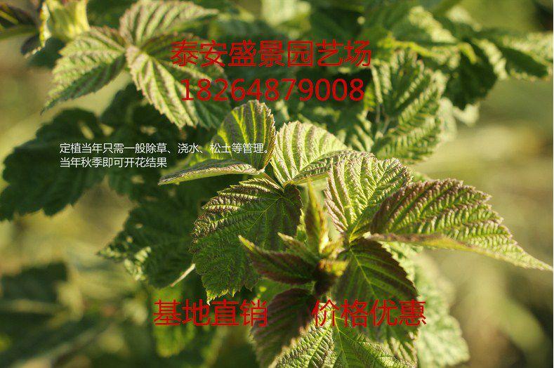 http://himg.china.cn/0/4_467_239282_789_524.jpg
