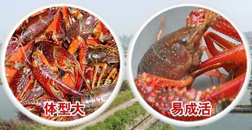 http://himg.china.cn/0/4_471_1072525_497_257.jpg